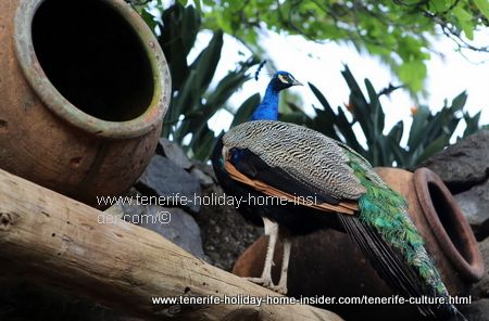 Rustic culture with dedication to nature at Meson Monasterio depicts a pheasant in unusual habitat.