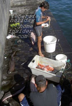 Shark fishing Puerto de la Cruz Tenerife Spain