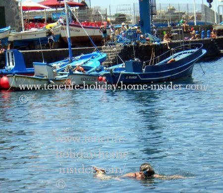 Snorkeling Puerto de la Cruz port