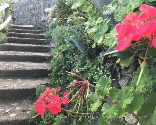 Steps to sea pools below the nature trail of Las Aguas Tenerife, a romantic spot for young couples