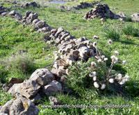Stone borders