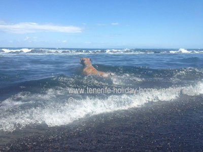Swimming dog in Atlantic waters