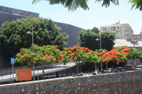T.E.A.Tenerife contemporary art museum in its capital.