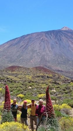 The Tajinaste a natural wonder not only on Tenerife Island but in the world