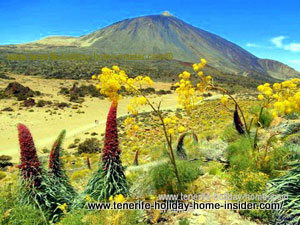 Tenerife at its best with Tajinastes in spring