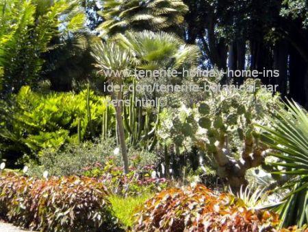 Tenerife botanical gardens jardin botanico