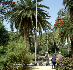 Tenerife cyclist at Santa Cruz city park by the Rambla