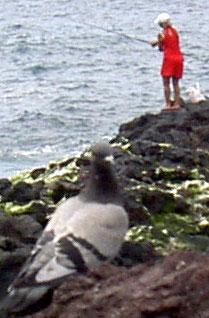 Tenerife fishing by girl in red Mini dress by San Telmo Puerto de la Cruz