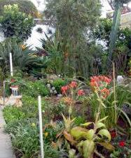 Tenerife garden the Orotava Valley