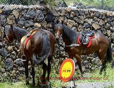 Tenerife horses by Augamansa
