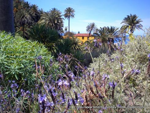 Tenerife Lavender wild and wonderful by La Casona de los Castro.