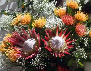 Tenerife Proteas Leucospermum Pincussion species as well as the King Protea.