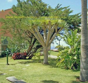 Tenerife self catering apartment