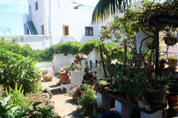 Don German's townhouse garden at Realejo Alto.