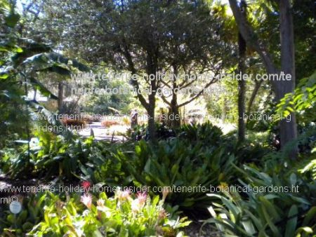 Tropical landscaping ideas in Tenerife
