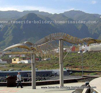 Whale fossil Sei Whale at Los Silos Tenerife Spain