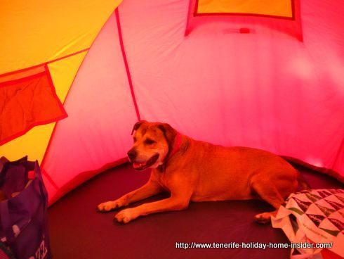 Dog friendly beach tent with our old Jesse on Las Teresitas.