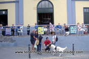 Dog romance by balcony restaurant Cayaya Tenerife