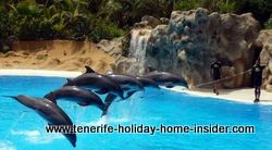 Dolphins in Tenerife Loro park Spain