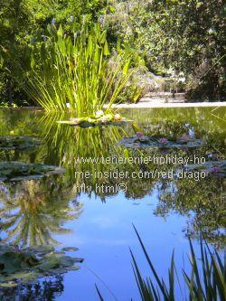 Dragonfly habitat of pond of Jardin Botanico Puerto de la Cruz