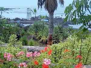 Geranium beach of Tenerife