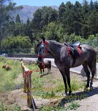 Horse finca country paddock of farm aguamansa