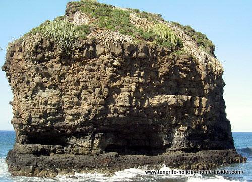 Natural wonders by indigenous plants growing on lava rock in Atlantic ocean