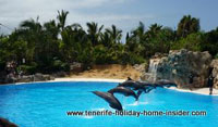 Show pool stunt pool Loro Park Puerto Cruz Tenerife Spain