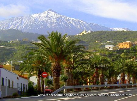 Tenerife climate contrasts depicted by a palm avenue near Icod de los Vinos with a snow capped Teide behind.