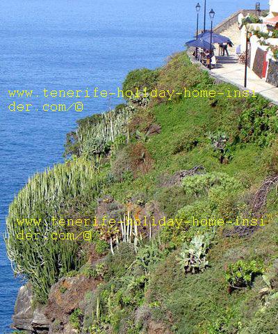 Tenerife nature of Acantilados cliffs