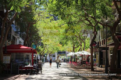 Tenerife towns typical for tree lined streets